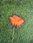 Solo Poppy, 11 x 14, oil on canvas (7/2015)